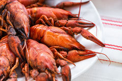 Boiled lobsters on a white plate Stock Photos
