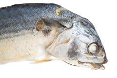 Boiled mackerel isolated on white background.  Stock Photos