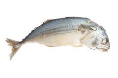 Boiled mackerel isolated on white background.  Stock Images