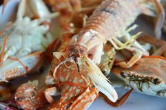 Boiled Mantis shrimp Royalty Free Stock Photos