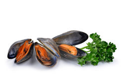 Boiled mussel Stock Photography