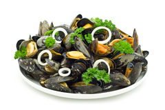 Boiled mussels Stock Image