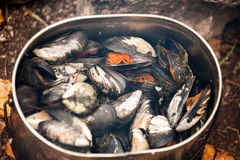 Boiled mussels Stock Photography