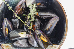 Boiled mussels Stock Images