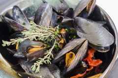 Boiled mussels Royalty Free Stock Images