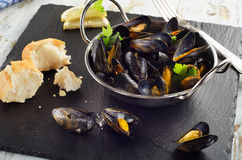 Boiled mussels in cooking dish on dark background. Royalty Free Stock Photo