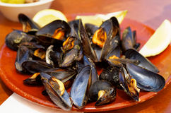Boiled Mussels Royalty Free Stock Photos