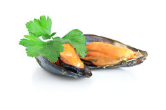 Boiled mussels isolated over white Stock Photos