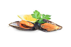 Boiled mussels  isolated on white Royalty Free Stock Image