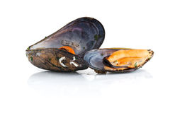 Boiled mussels  over white background Royalty Free Stock Photos