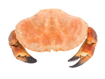 Boiled orange crab with large claws Royalty Free Stock Image
