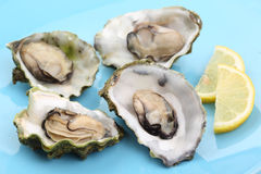 Boiled oysters with lemon juice Stock Images