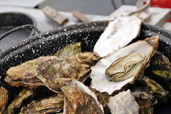Boiled oysters with natural light Royalty Free Stock Photos