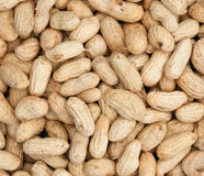 Boiled peanuts background Royalty Free Stock Image