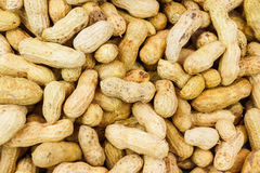 Boiled peanuts. In various sizes Royalty Free Stock Photos