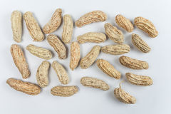 Boiled Peanuts. On white background Stock Image
