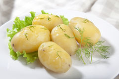 Boiled potato. With lettuce and dill on the plate Royalty Free Stock Photography