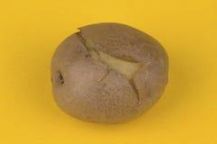 Boiled potato Royalty Free Stock Photography
