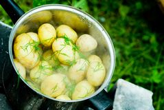 Boiled Potatoes. A pot of potatoes in the boil with some dill in an outdoor cookout Royalty Free Stock Photos