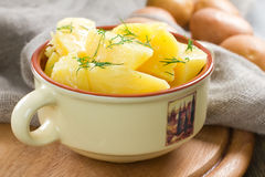 Boiled potatoes with dill Stock Photography