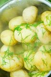 Boiled potatoes with fresh dill Stock Photos