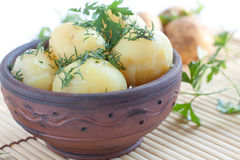 Boiled potatoes  with green dill Royalty Free Stock Images