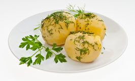 Boiled potatoes. With Greens on a plate Stock Images