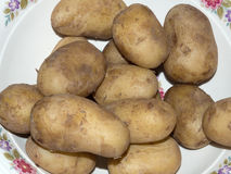 Boiled potatoes in the plate Royalty Free Stock Photo