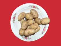 Boiled potatoes in the plate Stock Image