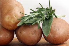 Boiled potatoes with rosemary Royalty Free Stock Images