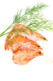 Boiled prawns with dill Royalty Free Stock Photography
