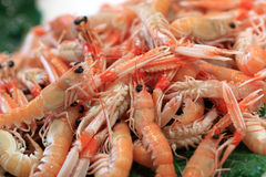 Boiled prawns on market Stock Photo