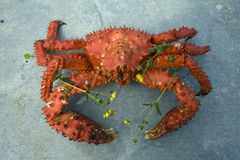 Boiled red crab. Stock Images