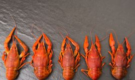 Boiled red crawfish ready to eat. Beer snack. Crayfish to beer. Red boiled crayfish on stone slate dark background. Royalty Free Stock Photos