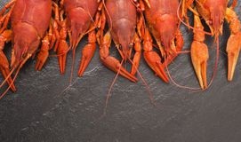 Boiled red crawfish ready to eat. Beer snack. Crayfish to beer. Red boiled crayfish on stone slate dark background. Stock Photos