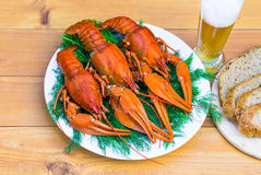 Boiled red crawfish on a white plate with green fennel on a wooden background. Stock Image