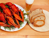 Boiled red crawfish on a white plate with green fennel on a wooden background. Royalty Free Stock Image