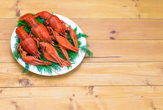 Boiled red crawfish on a white plate with green fennel on a wooden background. Royalty Free Stock Photography