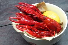 Boiled red crawfish on wood Stock Photography
