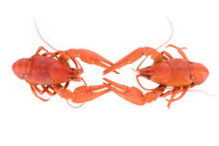 Boiled red crawfishes Stock Images