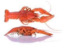 Boiled red crawfishes Royalty Free Stock Photos