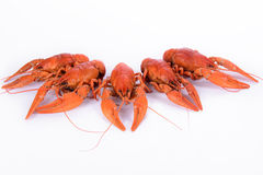 Boiled red crawfishes Royalty Free Stock Photography