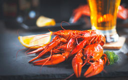 Boiled red crayfish or crawfish with a beer and herbs Stock Photography