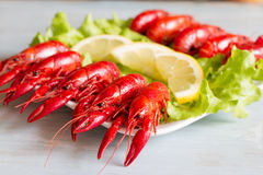 Boiled red crayfish on the plate food concept Royalty Free Stock Image