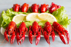 Boiled red crayfish on the plate food concept Stock Image