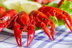 Boiled red crayfish on the plate food concept Royalty Free Stock Photos