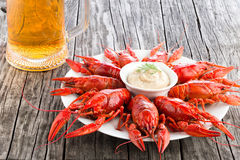 Boiled red crayfishes with glass of fresh lager beer Stock Photos