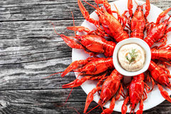 Boiled red crayfishes with sauce of grated horseradish, close-up Stock Images