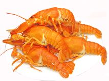 Boiled red lobster heap Royalty Free Stock Photography