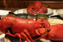 Boiled red lobster Royalty Free Stock Images